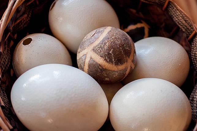 Ostrich Egg Shells