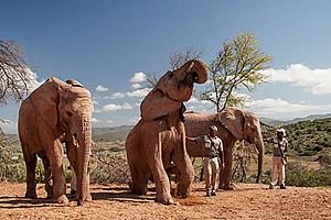 Elephants in Oudtshoorn