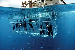 Shark Cage Diving in Mossel Bay